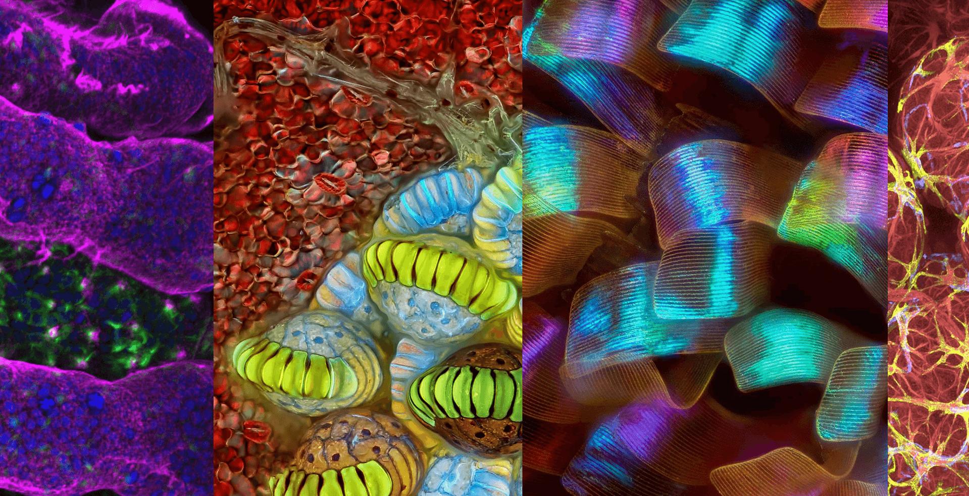Grupo-Testek-Ecuador-nikon-microphotography4 (1)